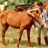 """Andrés Romero, protagonista del programa """"El toro y el caballo"""""""